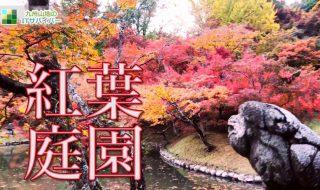 動画:美しく色づいた見頃の紅葉庭園を散策!おすすめ絶景ドローン映像4K 九州 ランキングにあまり入らない穴場